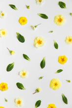 Spring Flower Background