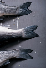 Three Sea Bass Tail Fins On Grey Background.