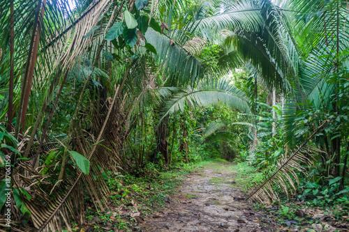 Fotografie, Obraz  Hiking trail in Cockscomb Basin Wildlife Sanctuary, Belize.