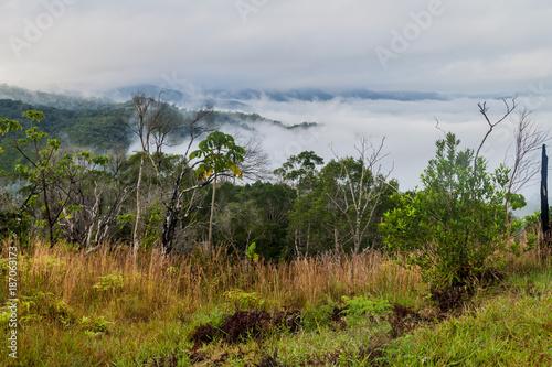 Morning mist in Cockscomb Basin Wildlife Sanctuary, Belize. Fototapet