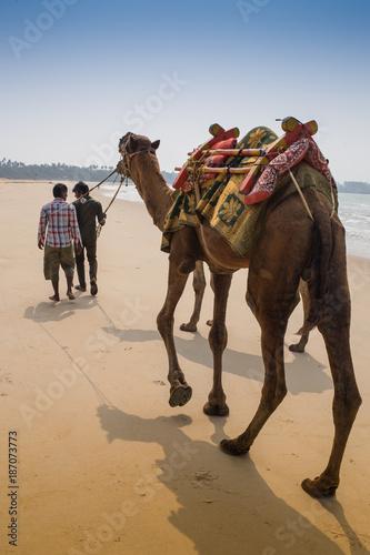 Indian cameleer - camel driver with camels Fototapeta