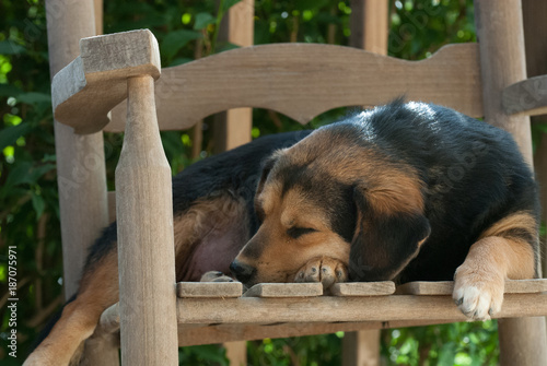 Stupendous Sleeping Dog In Rocking Chair Buy This Stock Photo And Frankydiablos Diy Chair Ideas Frankydiabloscom