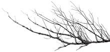 Branches Mortes, Fond Blanc
