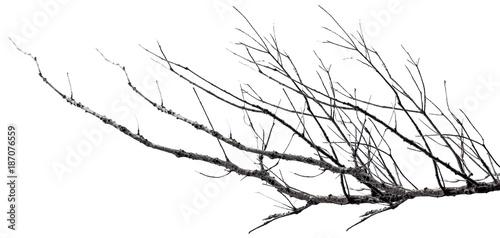 branches mortes, fond blanc Fototapeta