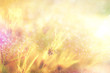 grass flower field in spring background with sunlight soft romance in golden tone