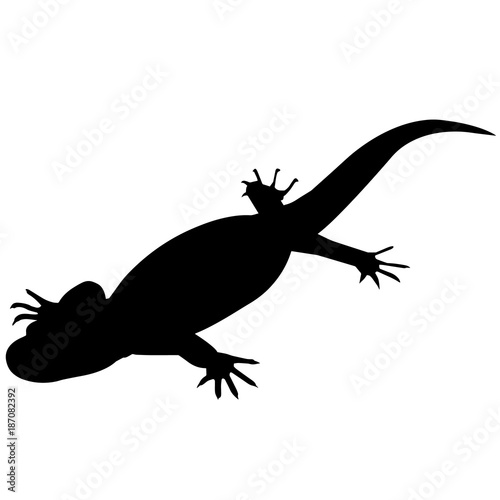 Newt Silhouette Vector Graphics Canvas Print