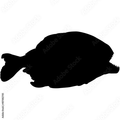 Fotografie, Obraz  Piranha Silhouette Vector Graphics