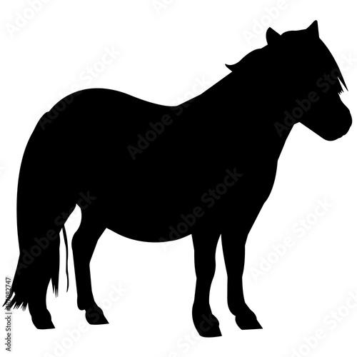 Pony Silhouette Vector Graphics Canvas Print