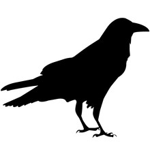 Raven Silhouette Vector Graphics