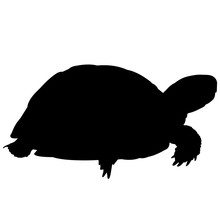 Tortoise Silhouette Vector Gra...