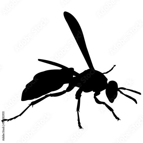 Valokuva  Wasp Silhouette Vector Graphics