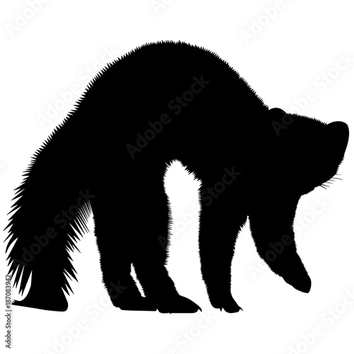 Photo  Weasel Silhouette Vector Graphics