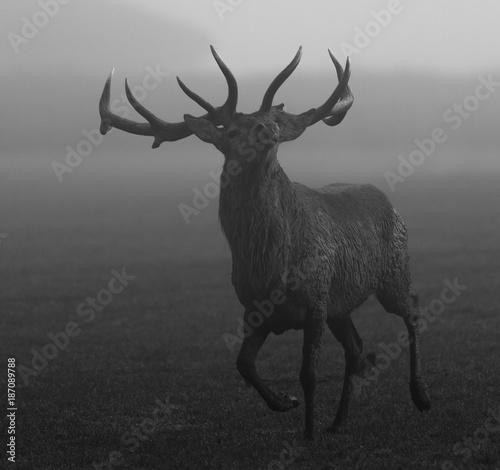 Foto op Canvas Hert Deer - Cerf