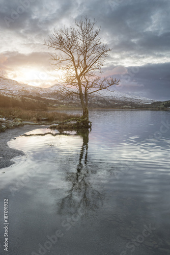 Foto op Aluminium Grijs Stunning sunrise landscape image in Winter of Llyn Cwellyn in Snowdonia National Park with snow capped mountains in background