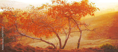 Foto op Canvas Baksteen autumn trees in the morning in the mountains