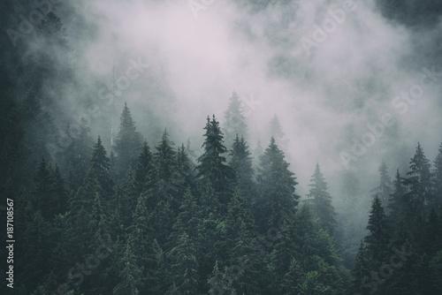 mglisty-krajobraz-z-jedlinowym-lasem-w-modnisia