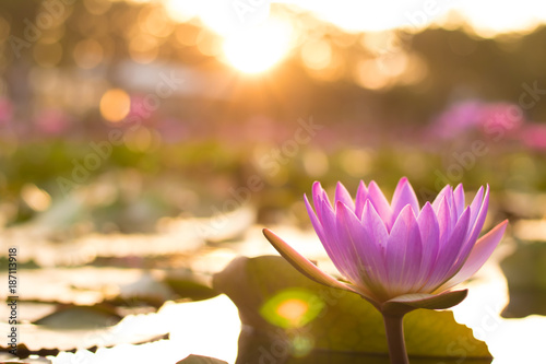 Photo Stands Water lilies lotus flower natuer