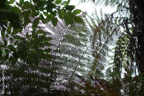 Poster Océanie シダの葉しげる森で空を見上げる