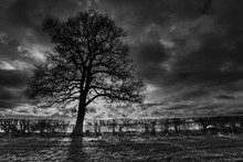 Winter Tree (bw)