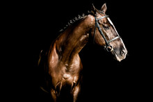 Beautiful Stallion Posing On A...