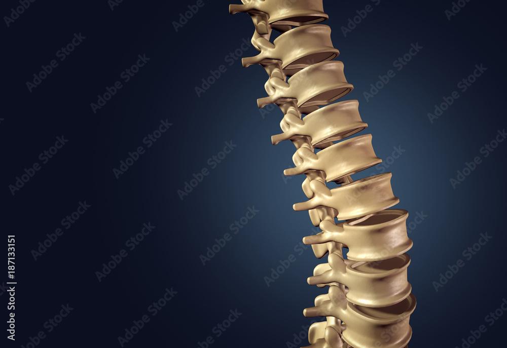 Skeletal Human Spine Foto Poster Wandbilder Bei Europosters