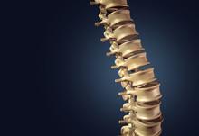 Skeletal Human Spine