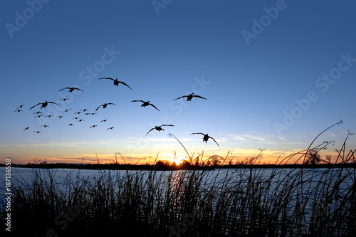 Photo sur Aluminium Chasse Waterfowl Sunset