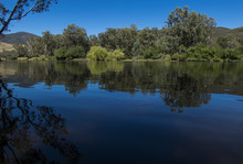 The Murray River Near Jingelli...
