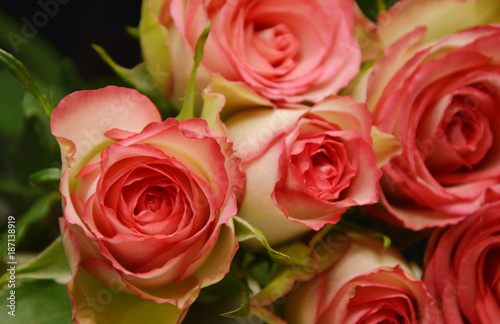 pink and white flower for a special day Wallpaper Mural