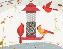 Cute Red Northern Cardinal Bir...