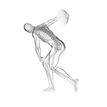 Discus Thrower's Skeletal Syst...