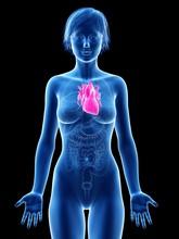 Illustration Of Female Heart A...