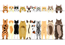 Standing Cats Front And Back Border Set