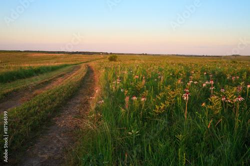 Wah'Kon-Tah Prairie Pathway with Purple Coneflowers Fototapet