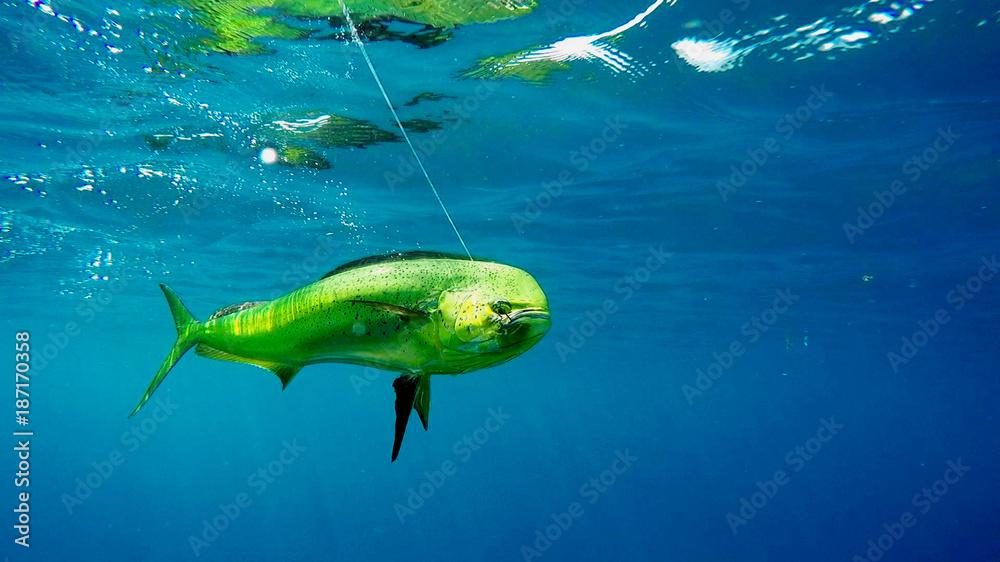 Fototapeta Pesca Fish sport