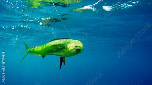 Fotografie, Obraz  Pesca Fish sport
