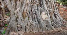 Sandstone Buddha Face Entwined In Tree Roots At Ruins In Thailand