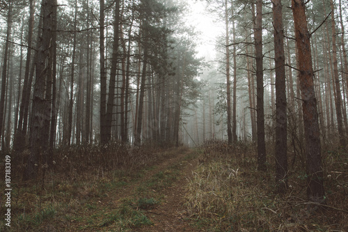 Spoed Foto op Canvas Grijze traf. Misy forest landscape. Beautiful forest morning. Travellers paradise.