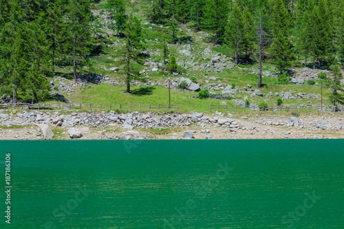 a suggestive green mountain lake in the National Park of Great Paradise,in Piedmont,Italy /the green color of the pines on the mountain reflects on the lake