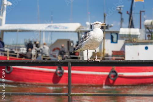 Möwe und Boot im Hafen