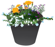Black Flower Planter Containin...