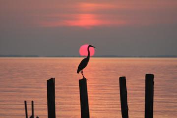 Fototapeta Krajobraz Chesapeake