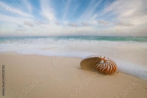 Valokuva  nautilus sea shell  with waves in  soft sunrise ight