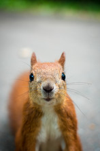 Surprised Squirrel Looks Into The Lens