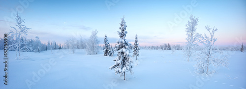 Single New Years fir tree in the snow winter forest  in blue tones panorama #187256306