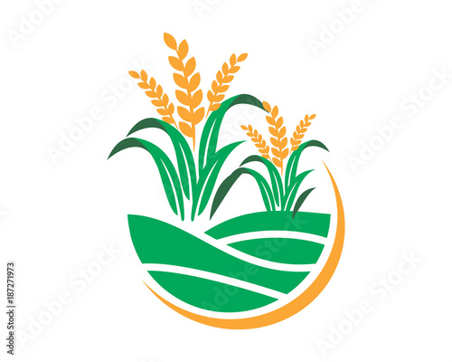 Fototapeta paddy wheat icon agricultural agriculture harvest farming image vector