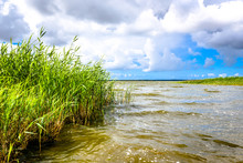 View Of Lake With Tall Grass, ...