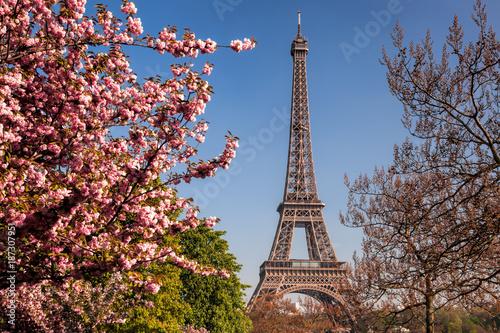 Fototapeta Wieża Eifla z wiosen drzewami w Paryż, Francja