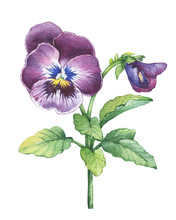 Illustration Of The Garden Pan...