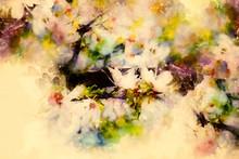 Spring Flowers, Spring Blossom...